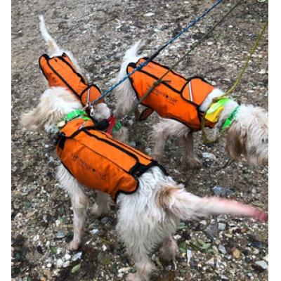 Dog Protection